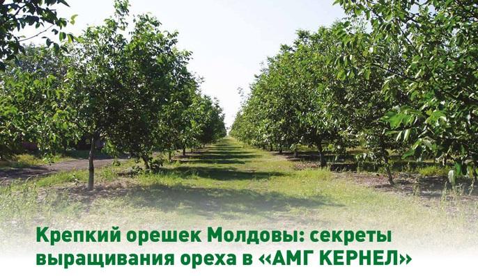 """Публикация в Журнале """"Орешник"""" №1 2018"""